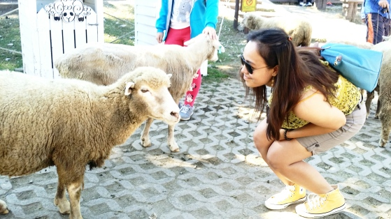 Sheep at Cingjing Farm