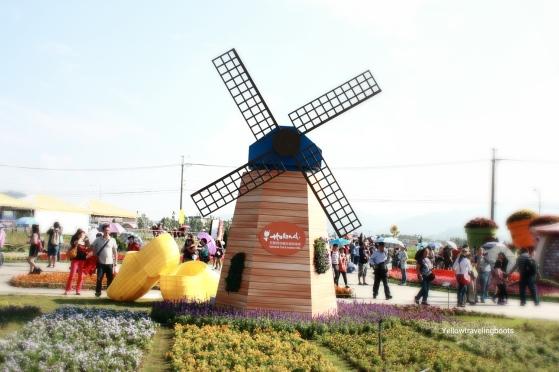 Sea of Flower Festival 10