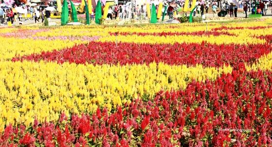 Sea of Flower Festival - 4