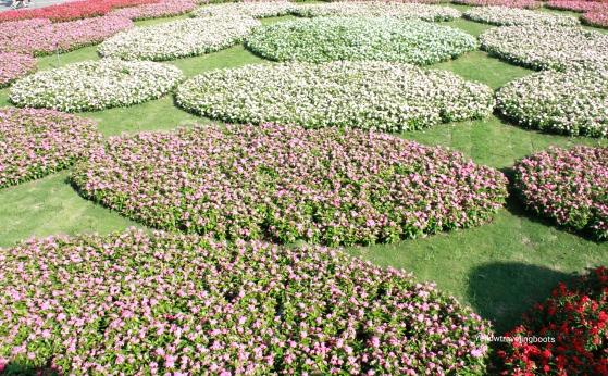 Sea of Flower Festival 6