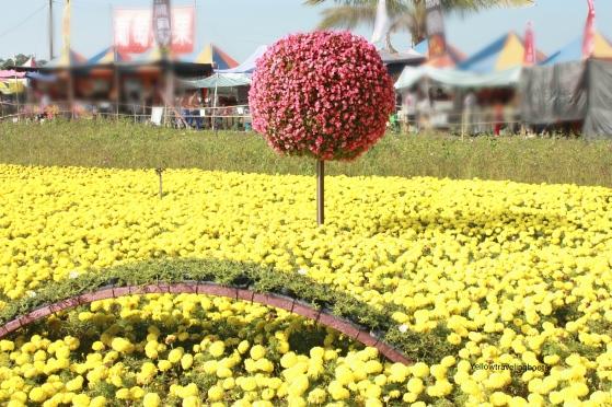 Sea of Flower Festival 7